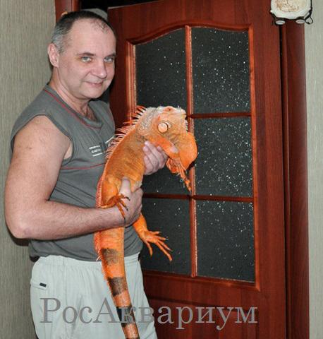 Дмитрий Уткин рассказывает о кормлении игуаны
