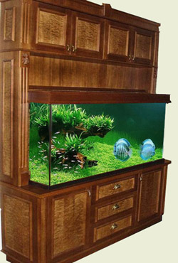 Продажа эксклюзивных аквариумов.