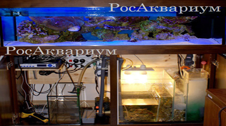 Купить оборудование для морского аквариума.