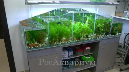Купить аквариум для живой рыбы.