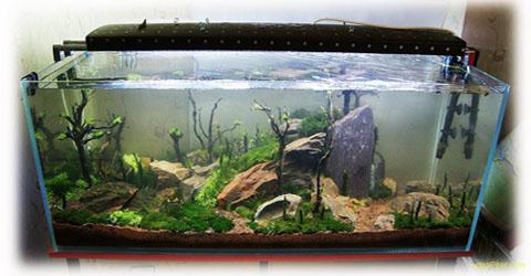 Купить аквариум без крышки - банку.