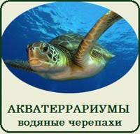 Купить террариум (акватеррариум) для красноухой черепахи