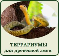 Купить террариум для древесной змеи