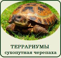 Купить террариум для черепахи