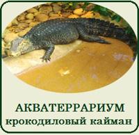 Купить террариум для крокодилового каймана