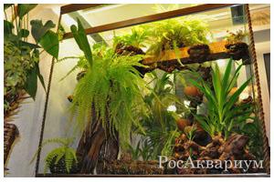 Оформление террариумов для растений