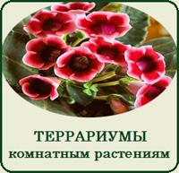 Купить террариум для комнатных растений