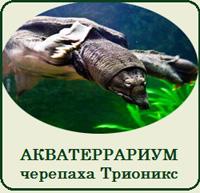 Террариумы (Акватеррариумы) для черепахи Трионикс