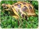 Купить террариум сухопутной черепахи