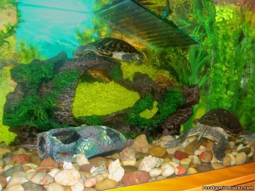 террариумы черепах своими руками