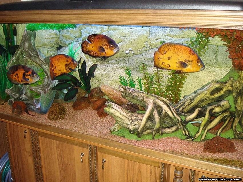 Декор в аквариуме своими руками фото 735