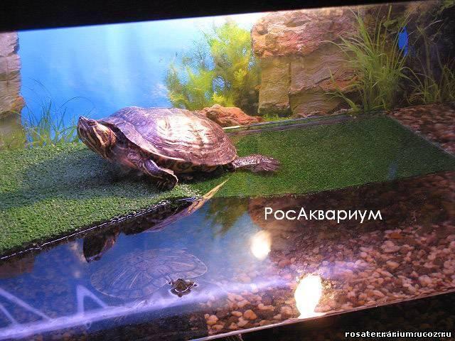 Как в аквариуме сделать островок для черепахи своими руками фото 144