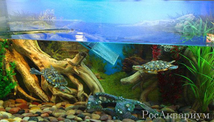 Какие водоросли можно красноухим черепахам
