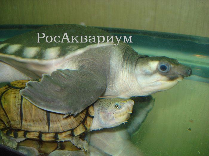 Фото аквариумов с черепахой