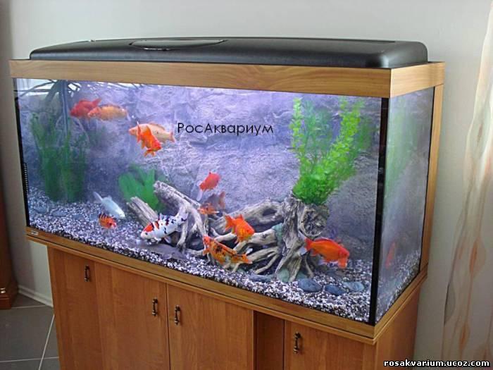 где купить рыбак в аквариум