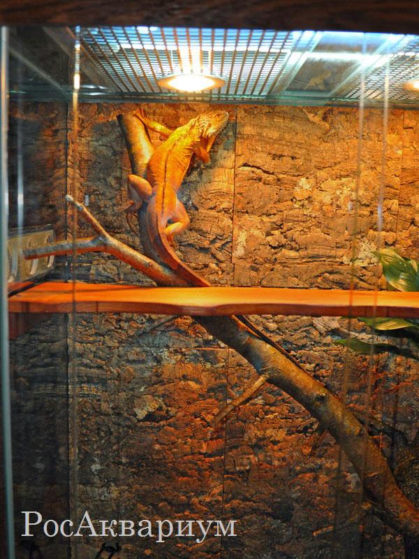 Террариум для зеленой игуаны своими руками 316