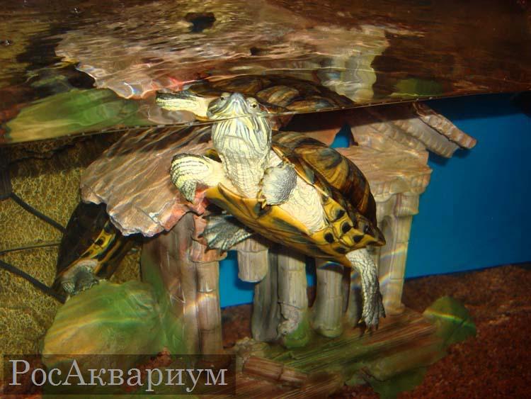 Аквариум для черепах (46 фото