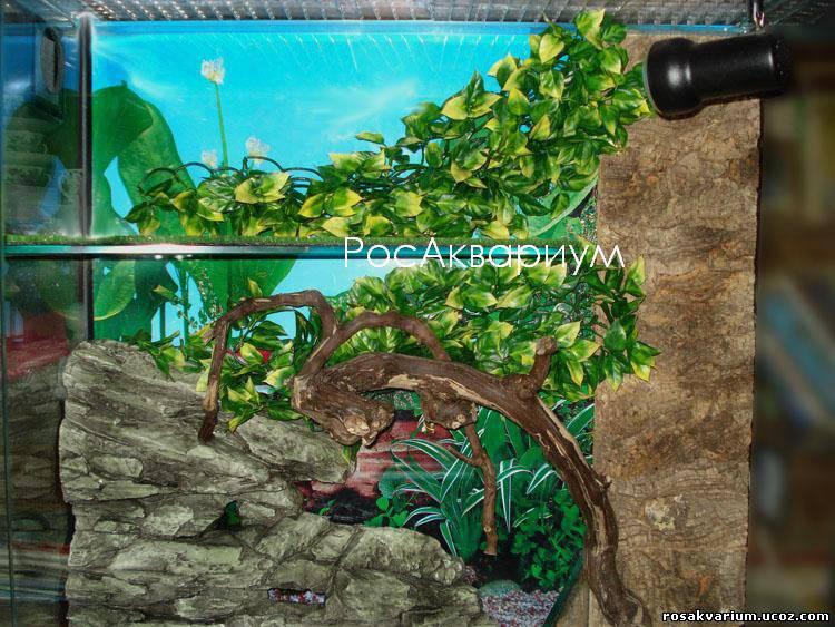 Оформление террариума с игуаной - РосАквариум
