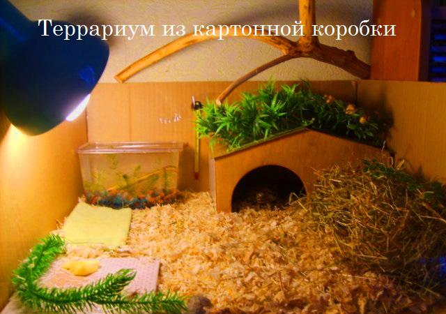 Террариум для сухопутной черепахой в домашних условиях 898
